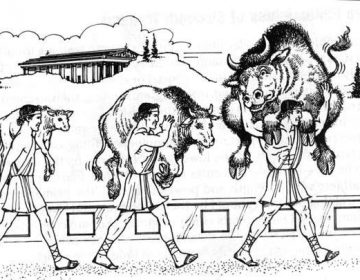 Milo of Croton growning in size as his calf grows into a bull