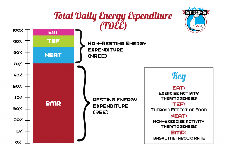 a bar graph showing Total Daily Energy Expenditure TDEE made up of BMR, NEAT, EAT, and TEF